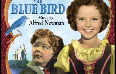 """בזכות הסטודנטיות של """"אמונה"""": הציפור הכחולה חוזרת"""
